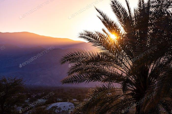 Sunlight illuminating a palm tree at sunset, Palm Springs, California