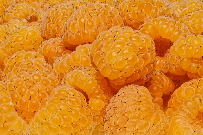 Grupo de frambuesas amarillas como Fondo