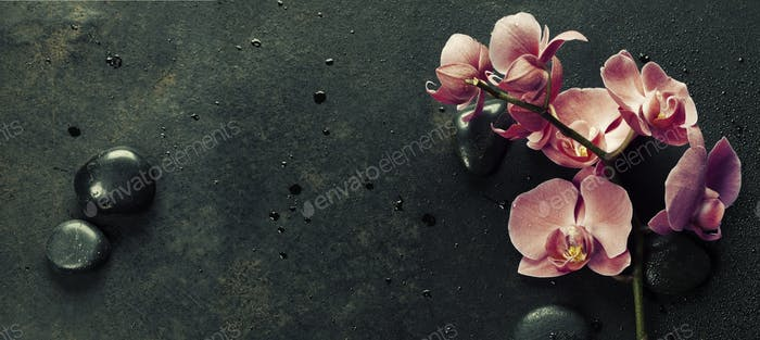 Spa stones and pink orchid on the dark background