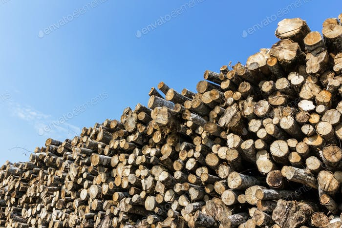 Waldkiefernbäume Holzstämme, die durch das Holzholz indust gefallen sind