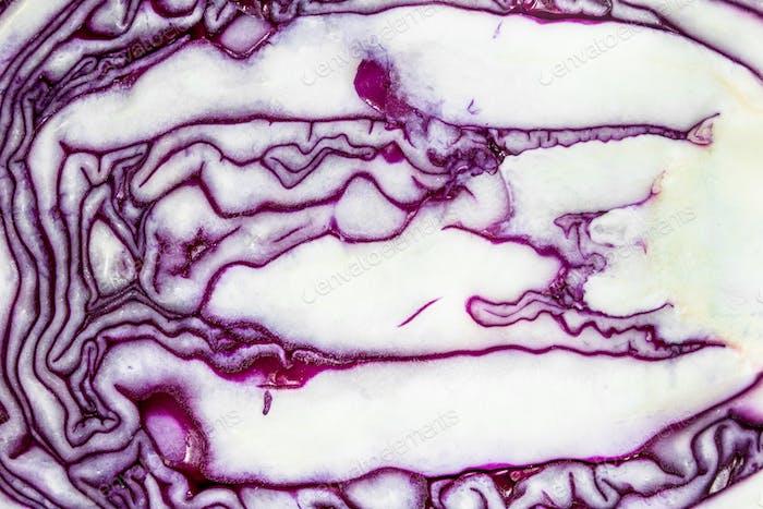 Fresh purple cabbage.