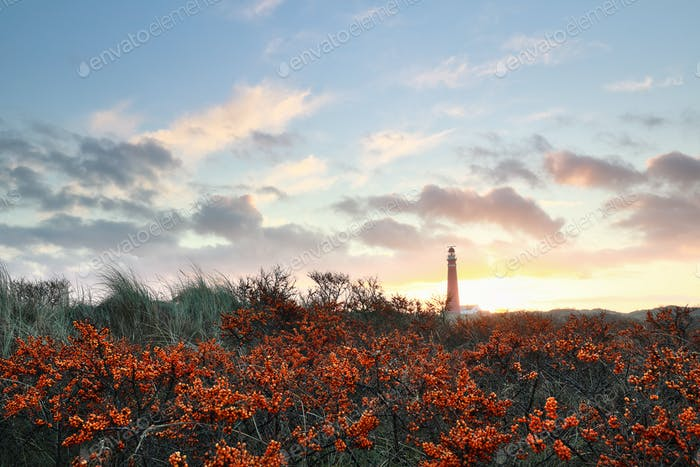 sunrise over lighthouse and seabuckthorn
