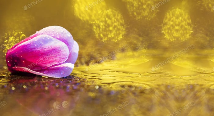 Pink flower greeting card background or web banner idea