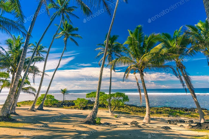 Tropical beach on Samoa Island with palm trees during late after