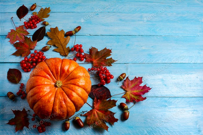 Thanksgiving background with ripe orange pumpkin on blue wooden