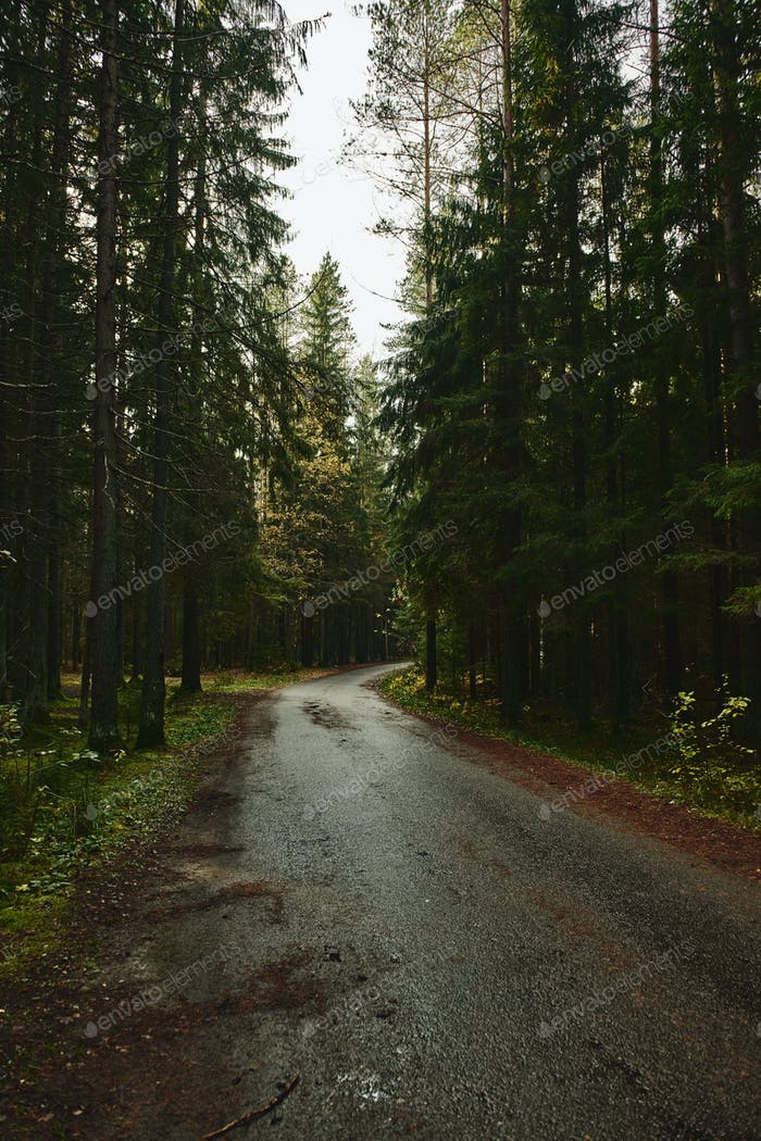 Asphalt road going through dark conifer forest