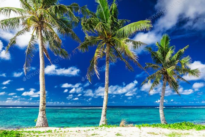 Tropical Lalomanu beach on Samoa Island with three palm trees, U