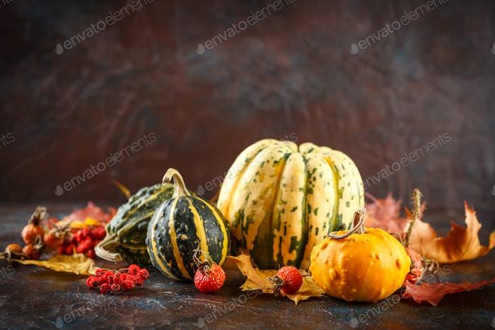 Small pumpkins decorative