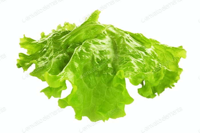 Leaf of lettuce isolated