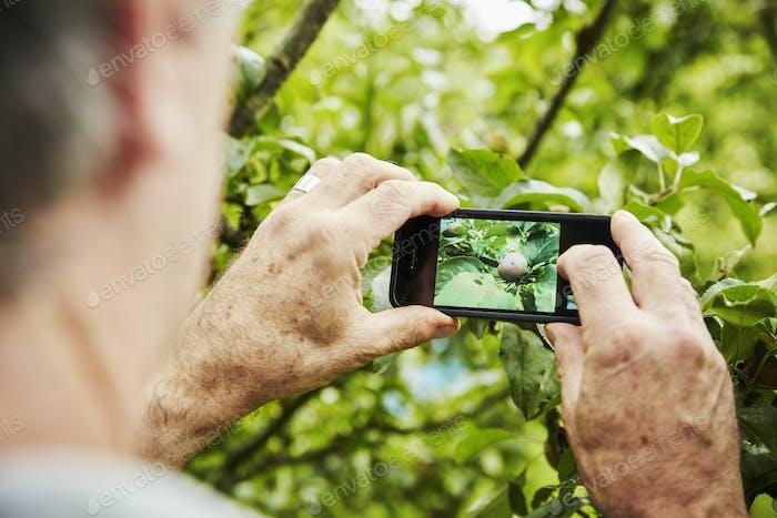 Ein Gärtner, der in einem Gemüsegrundstück in einem Garten arbeitet. Nehmen Sie ein Foto mit einem Smartphone von