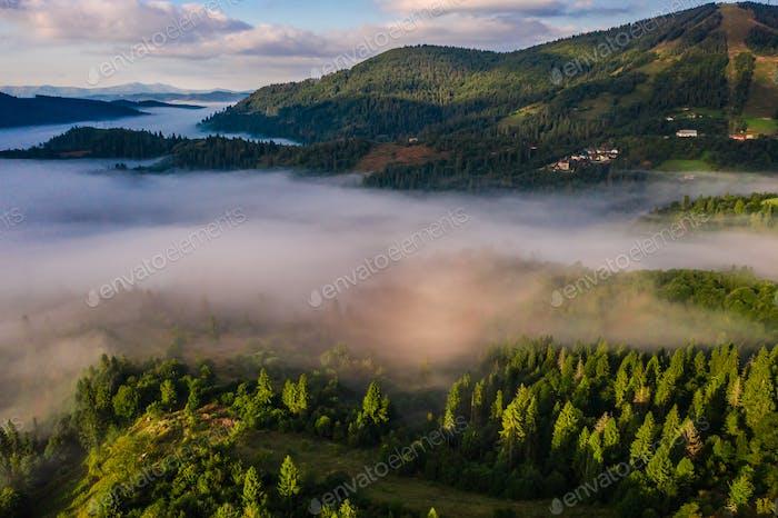 Luftaufnahme von bunten Mischwald in Morgennebel umhüllt an einem schönen Herbsttag