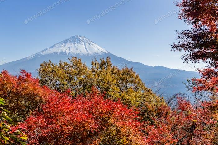 Mountain Fuji and maple