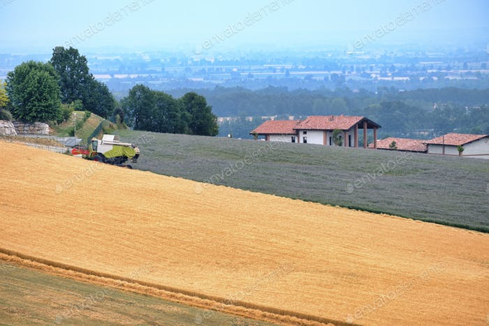 Felder in Val Tidone (Piacenza, Italien)