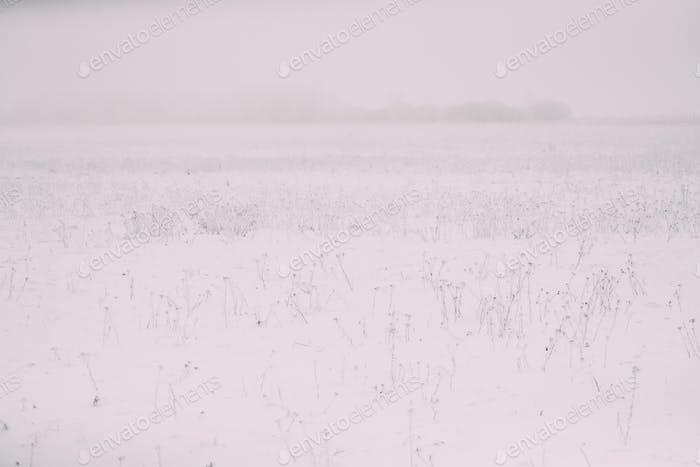 Snow-covered Field In Winter Frosty Day. Minimalism In Winter La