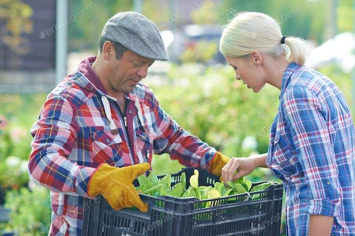 Fresh seedlings
