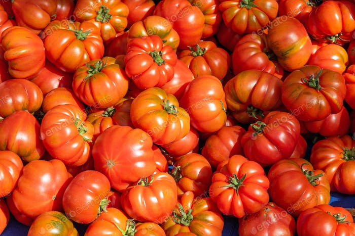 Ripped sicilian tomatoes for sale