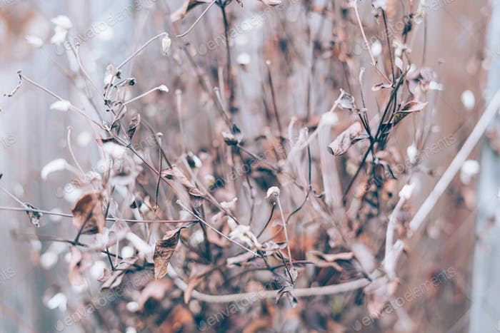 Moody dark art floral photo with little dried flowers of on dark dry brown background, winter