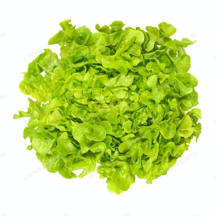 Green oak leaf lettuce from above over white