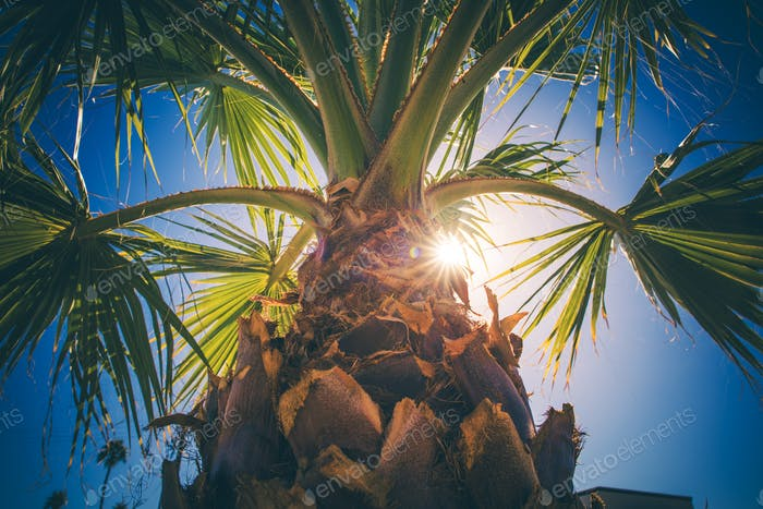 Coachella Valley Palm Tree