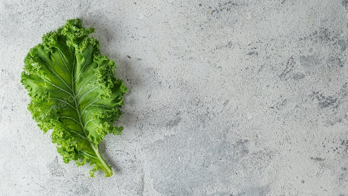 Green kale leaf on gray background, copy space, top view