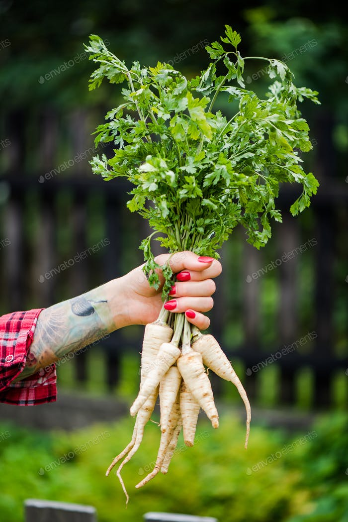 Tattooed millennials woman holding parsley in garden