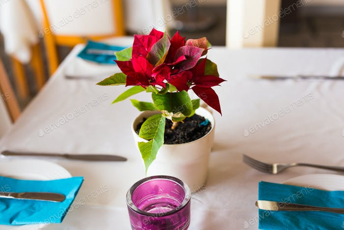 flowers pots decoration on the table