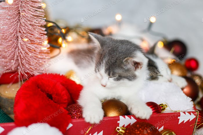 Happy Holidays! Cute kitten sleeping on cozy santa hat with red and gold ornaments in warm lights