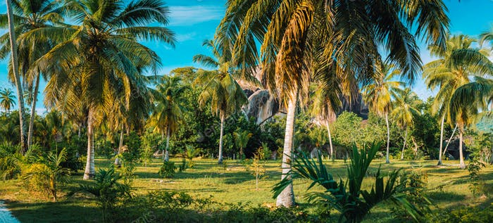 Palm grove panorama scenery in coconut plantation against granite rocks and blue sky in L Union