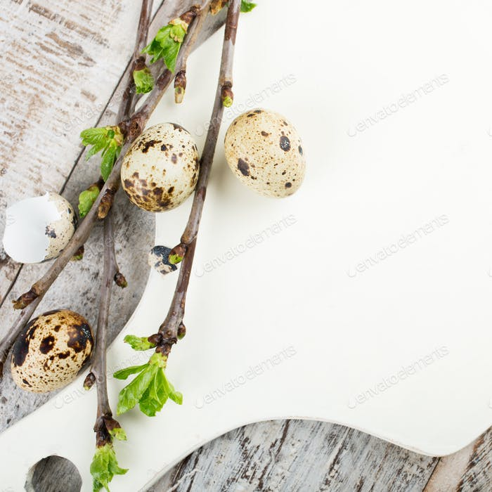 Quail eggs, green branches and white cutting board