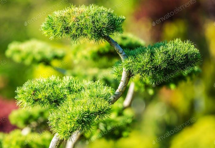 Dekorativer Gartenbaum