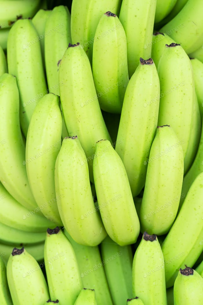 Green bunches of Cavendish banana-4