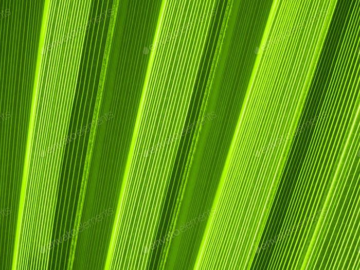 Tropical palm leaf, closeup texture