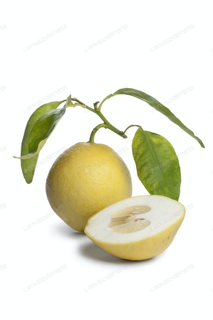 Citrus Medica fruit