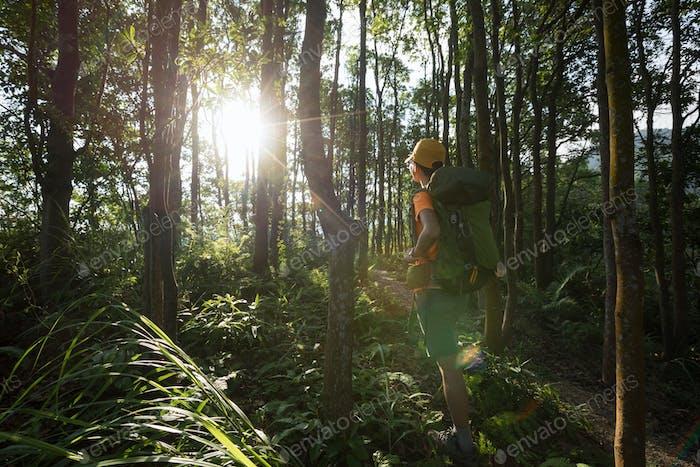 HikingWoman hiker hiking in summer sunrise forest mountain