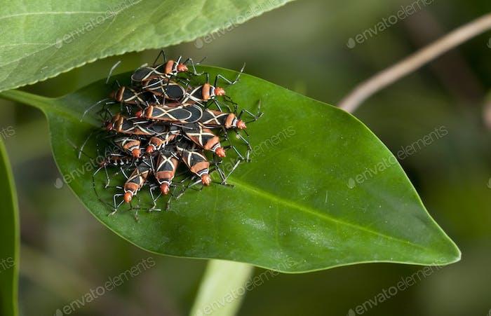 Tropische Insektengruppe