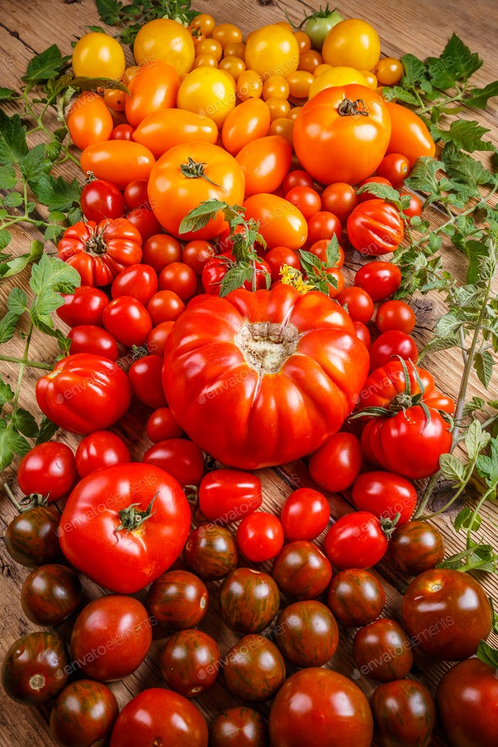 Colored fresh tomatoes