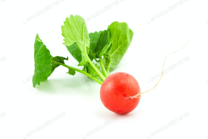 Organic fresh radish on white