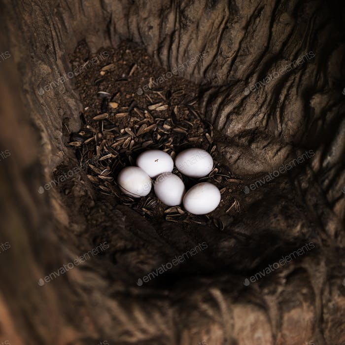 Nahaufnahme von tierischen Eiern auf dem Boden liegend
