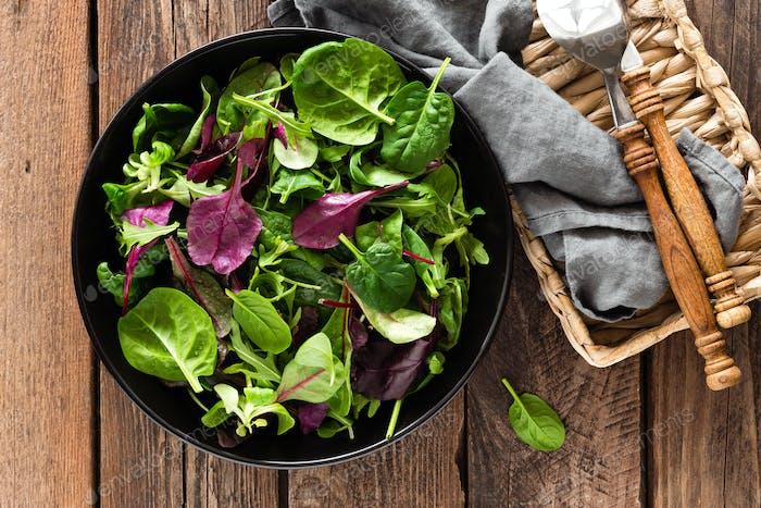 Frische Salatmischung aus Baby-Spinat, Rucola Blätter, Basilikum und Mangold. Italienische Küche