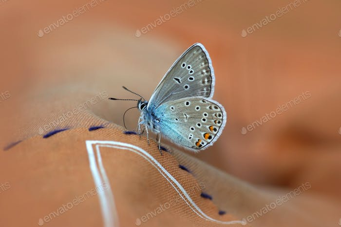 Close-up of beautiful butterfly