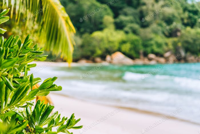 Holiday vacation background. Exotic blurred paradise beach and lush green foliage in foreground