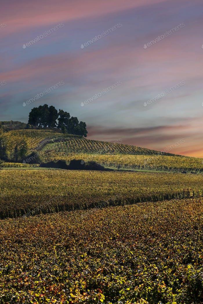 Horizontal de viñedos