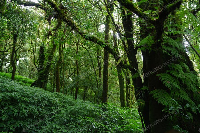 Tropical Rain Forest at Doi Inthanon National Park Chiang Mai Thailand