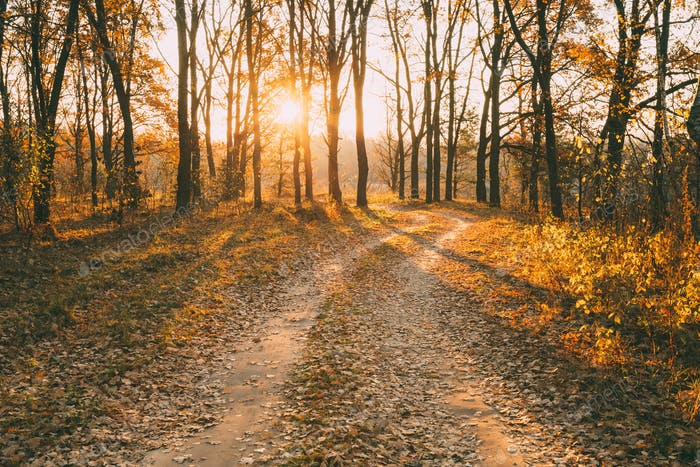 Countryside Road Path Walkway Through Autumn Forest. Sunset, Sun