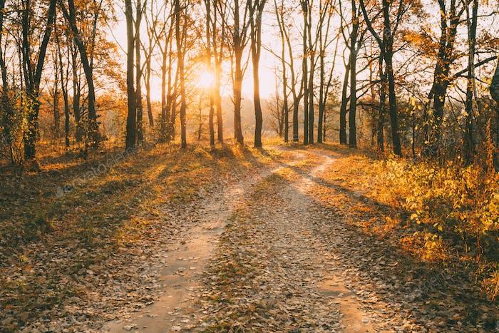 Countryside Road Path Walkway Durch Herbstwald. Sonnenuntergang, So
