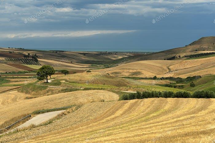 Rural landscape near Serracapriola, Apulia