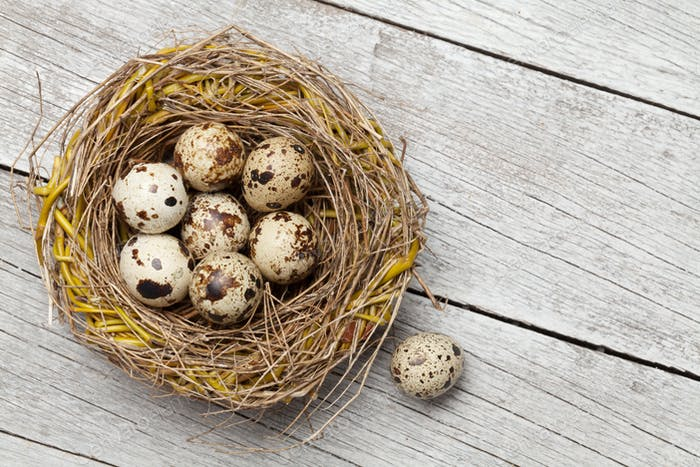 Easter greeting card with quail eggs