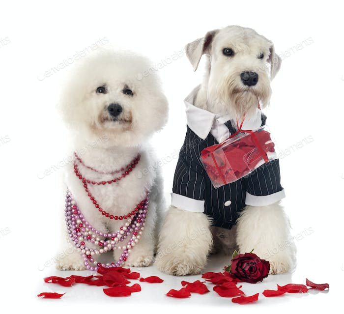 dogs and valentine day