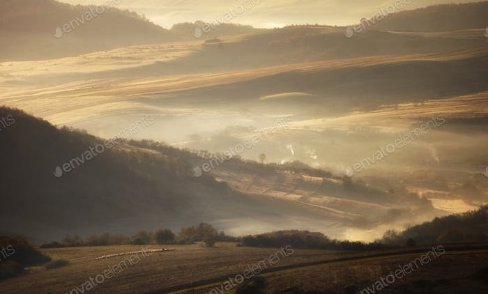 Meadow in autumn in the morning with fog