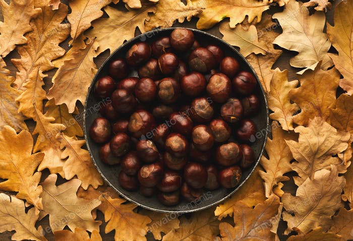 Chestnuts on plate on yellow oak leaves backgound